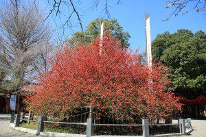 冠稲荷神社(ボケ)